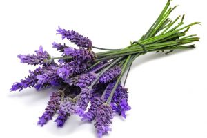 https://medcansupport.co.uk/wp-content/uploads/2020/04/Lavender-1_0-300x200.jpg
